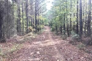 Parker Road Hunting & Timber Investment Tract