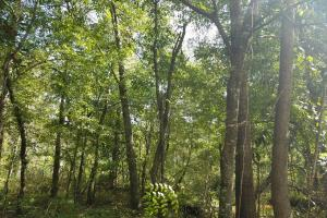 Skipperville/County Road 33 Hunting or Homesite - Dale County, AL