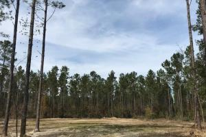 National Forest Homesite - Berkeley County SC