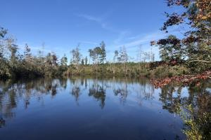 Greenville Hunting and Timberland Investment - Butler County, AL