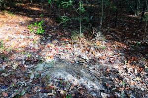 Sandy Ridge Rd Recreational and Hunting Tract in Mobile, AL (5 of 11)