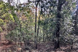 Sandy Ridge Rd Recreational and Hunting Tract in Mobile, AL (6 of 11)