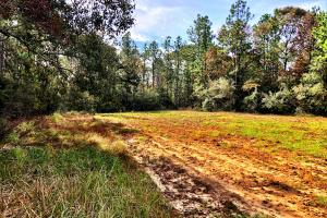 Sandy Ridge Rd Recreational and Hunting Tract in Mobile, AL (9 of 11)