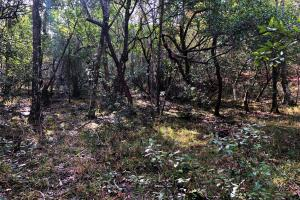 Sandy Ridge Rd Recreational and Hunting Tract in Mobile, AL (8 of 11)