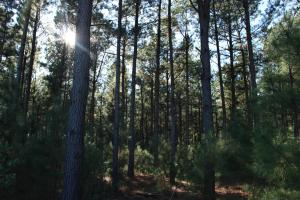 Highway 80 Timber Tract - Burke County GA