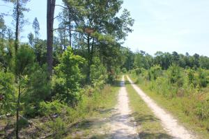 Black Creek Farms 14 Ac Home Site