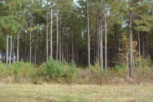 21.7 ac Hunting / CRP tract