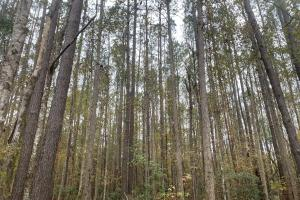 Highway 50 4.53 Acres - Pender County, NC
