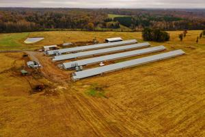 Cleveland County Broiler Chicken and Cattle Operation - Cleveland County NC