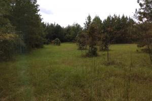 Prattville Hunting and Timber - Autauga County AL