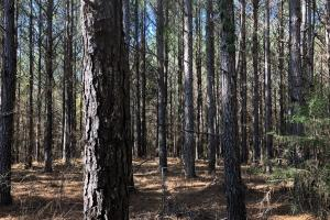 Small Timber & Hunting Tract - Pickens County, AL