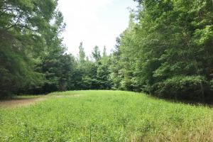 Sipsey Hunting Tract - Fayette County, AL