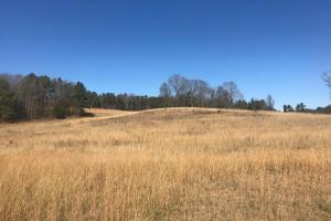 Lost Creek Farm, Timber & Recreation Tract - Lamar County AL