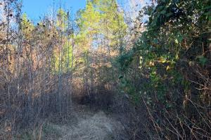 thicket (5 of 19)