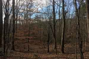 Homesite in Gated Hunting Reserve