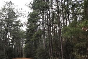 Vision Trail Hunting and Timber with Cabin