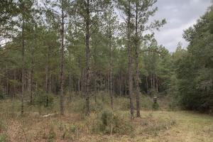 Oak Grove Rd Hunting Homesite and Mature Timber in Walton, FL (8 of 14)
