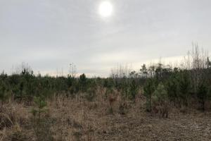34 acres Brunswick - Brunswick County, NC