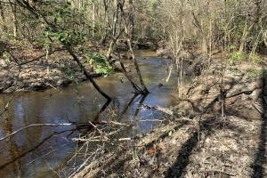 Buckatunna Creek Hunting and Timber Investment  - Clarke County MS