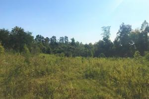 Keener Creek Vacant Land  - Stephens County, GA