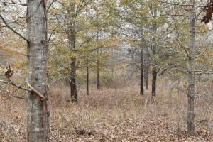 Poverty Point CRP Hunting Tract - Richland Parish, LA
