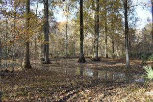 Deer and Duck Hunting - Epps, LA - Madison Parish LA