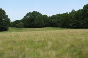 Wetumka 470 Acres - Okfuskee County OK