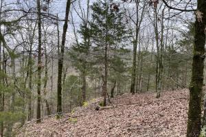 37+/- Acres Timberland  - Faulkner County, AR