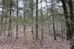 Land for Sale in Arkansas