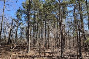 40+/- Acres Timberland in Ozark Mountains