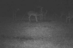 Trail Cam (72 of 89)