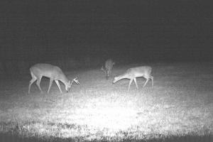 Trail Cam (67 of 89)