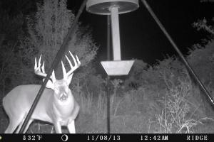 Trail Cam (2 of 89)