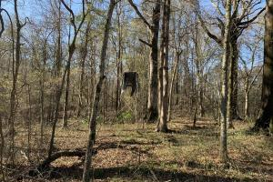 Deer stand in Timber (77 of 89)