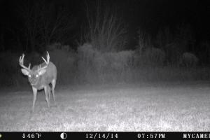 Trail Cam (3 of 89)