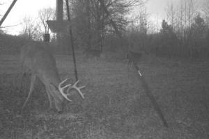 Trail Cam (70 of 89)