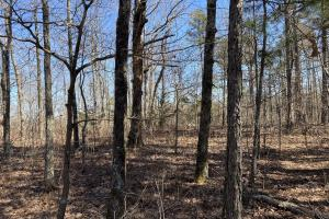 67+/- Acres Timberland