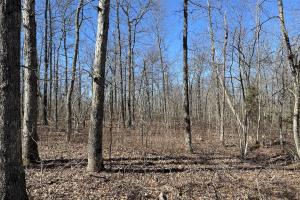 32+/- Acres Timberland