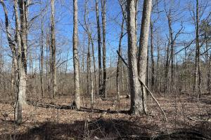 17+/- Acres Timberland