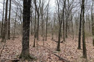 40+/- Acres Timberland