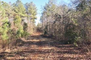 Brush Creek Deer, Turkey, and Duck Hunting Tract - Perry County, AL
