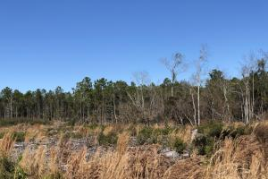 Cozy 5 Acre Homesite - Brunswick County, NC
