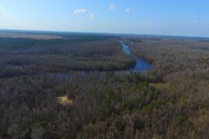 Cape Fear River Alligator Point - Pender County, NC