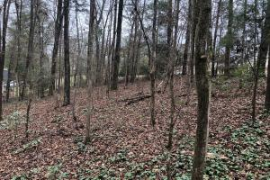 Olde Mill Trace Residential Lot - Tuscaloosa County, AL