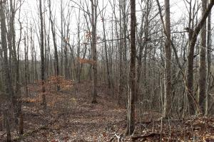 Private Forested Home Site Near Watts Bar Lake - Roane County, TN