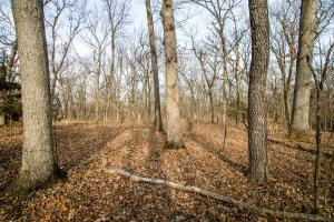 Secluded Build Site & Acreage in Eudora  in Douglas, KS (14 of 54)