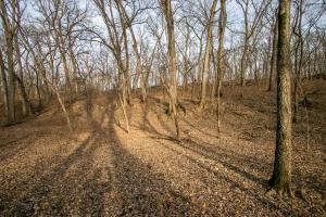 Secluded Build Site & Acreage in Eudora  in Douglas, KS (11 of 54)