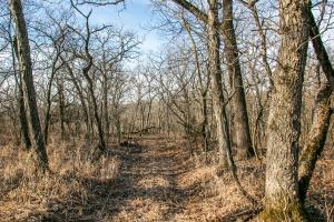 Secluded Build Site & Acreage in Eudora  in Douglas, KS (8 of 54)