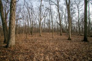 Secluded Build Site & Acreage in Eudora  in Douglas, KS (37 of 54)