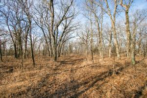 Secluded Build Site & Acreage in Eudora  in Douglas, KS (35 of 54)